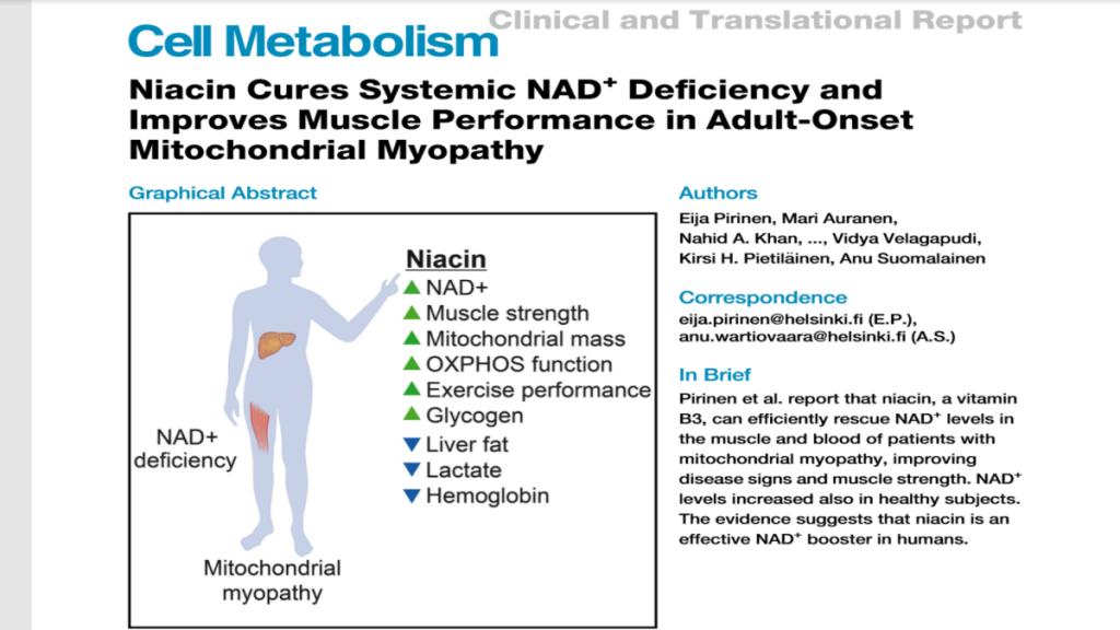 niacyna, inaczej kwas nikotynowy, podnosi poziom NAD+ w przypadku niedoboru